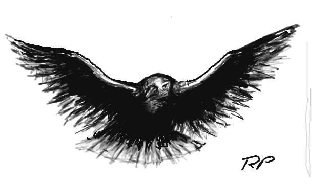 Wonderful Eagle
